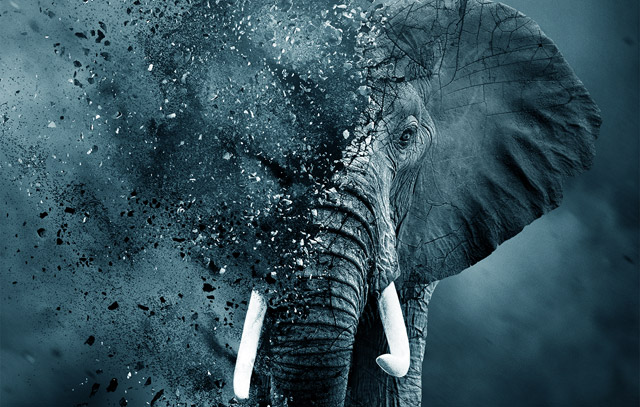 The Trailer and Poster for Leonardo DiCaprio's Ivory Game