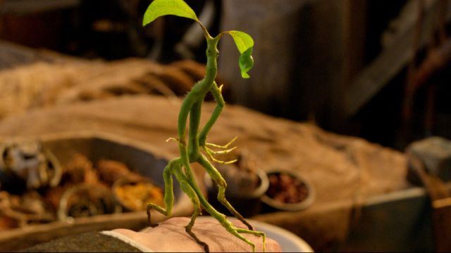 Meet Pickett the Bowtruckle in Third Clip from Fantastic Beasts