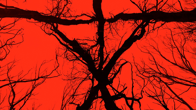 Eduardo Sanchez looks back at the history of the Blair Witch.