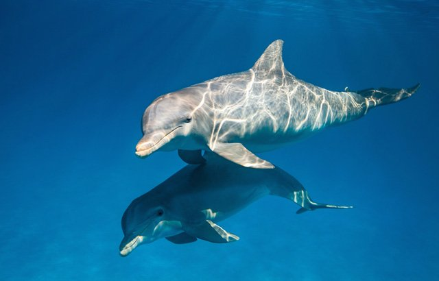 Disneynature Heads Under the Sea with Dolphins