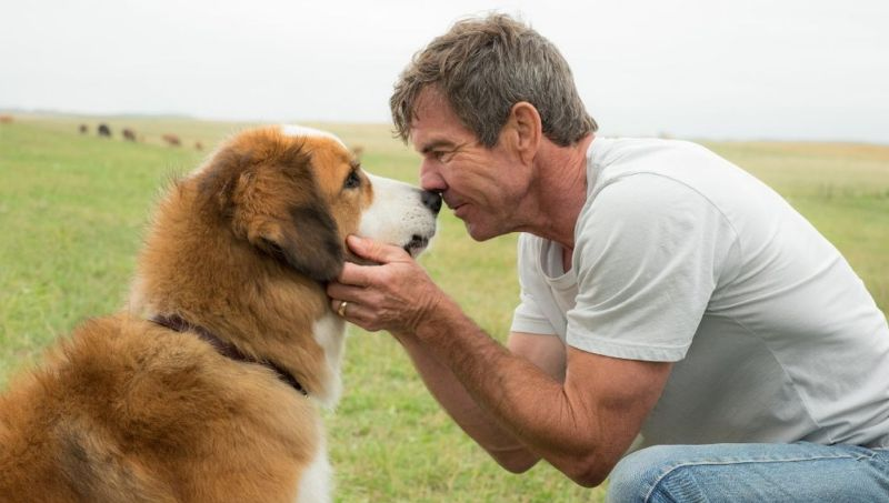 A Dog's Purpose Sequel Now in Production