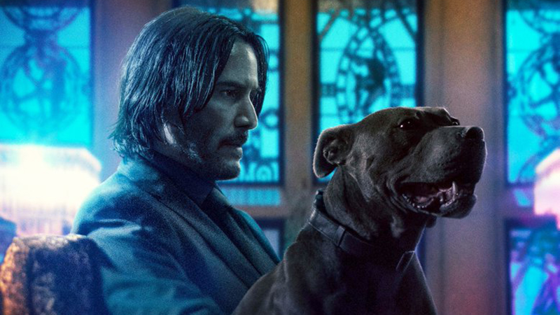 Animal Safety is Still a Priority In John Wick: Chapter 3 - Parabellum Clip