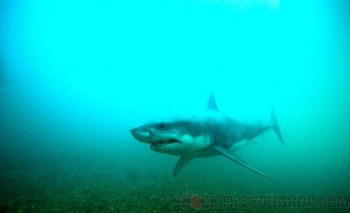 Shark_Night_3D_58